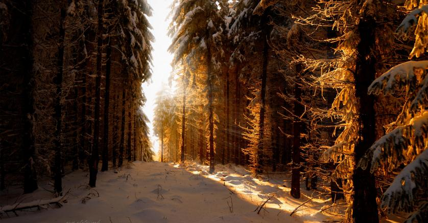 a-snow-winter-sunbeam-path-earth-forest-nature-4921.jpg